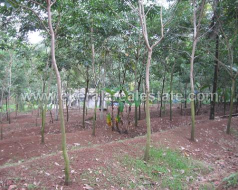 Nedumangad real Estate 1Acre land for sale Nedumangad Rubber plantation for Sale Agriculture Farm Land for Sale in Nedumangad - Vembayam Road