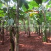 1 acre land for sale in Vellayani Kakkamoola Trivandrum for cheap rate