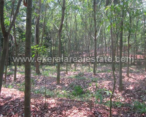 cheap rubber land for sale in attingal trivandrum kerala